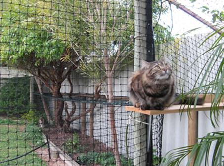 Cat_Enclosures